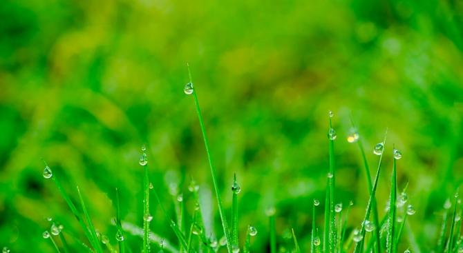 Обработват зелените площи срещу кърлежи в Шумен