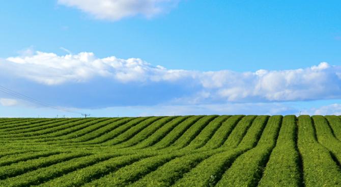 Земеделските стопани в Добричка област се подготвят за прибирането на новата реколта