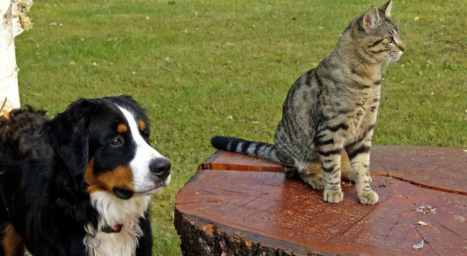Кучетата и котките в Китай стават официално домашни любимци