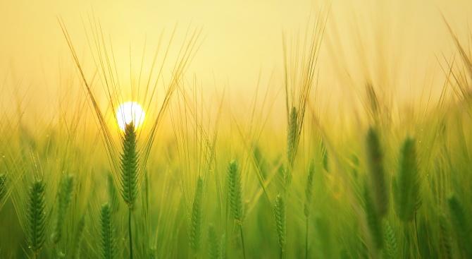 Издадена е нова заповед за превоза на земеделски работници във връзка с COVID-19