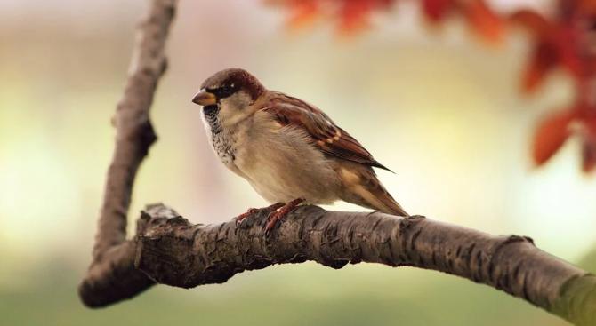 Приложение за преброяване на птици на БДЗП ще бъде ползвано в Албания