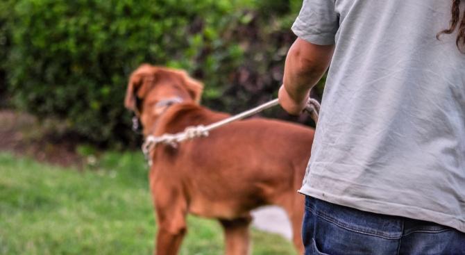 Трета площадка за разхождане на кучета ще бъде изградена в Шумен