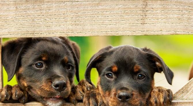 Над 70 кучета очакват своите осиновители в общинския приют във Велико Търново