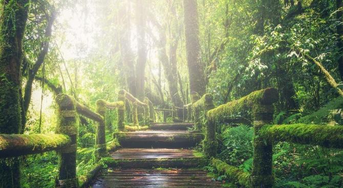 """Достъпът до туристическите пътеки в """"Сребърна"""" е свободен"""