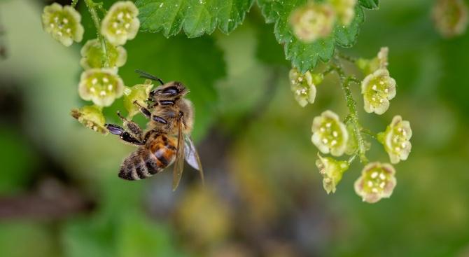 Пчелари искат отнемане на субсидията на земеделци заради непозволени пестициди