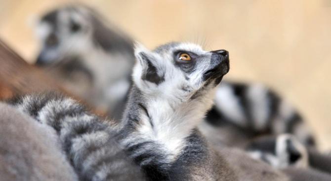 Зоологическа градина в София ще отвори врати за посетители на