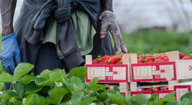 Италия временно узакони престоя на незаконните работници в земеделието и домашната помощ