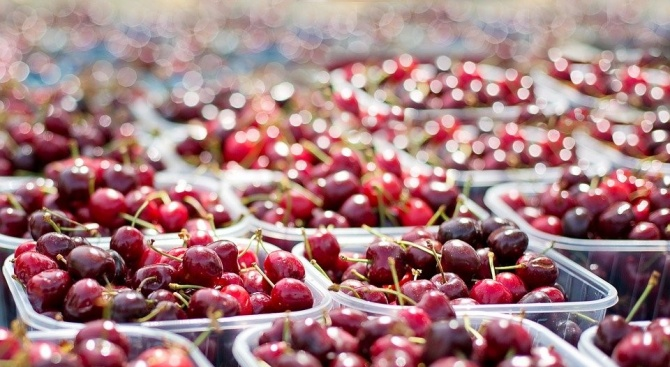 Ябълки, череши и сливи са най-широко застъпените плодни дръвчета в Пернишка област