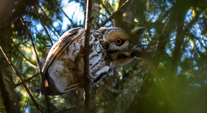 Експерти от РИОСВ-Перник спасиха сова