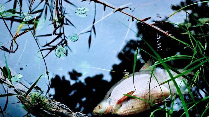 Мъртва риба покри част от брега на Варненското езеро
