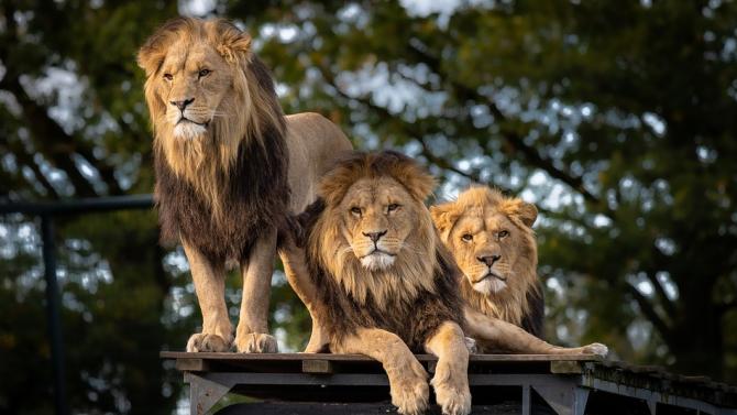 Унгарски цирк се трансформира в сафари парк заради кризата