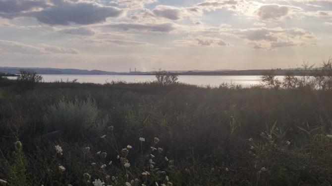 Експертите не откриха причини за измирането на рибата във Варненското езеро