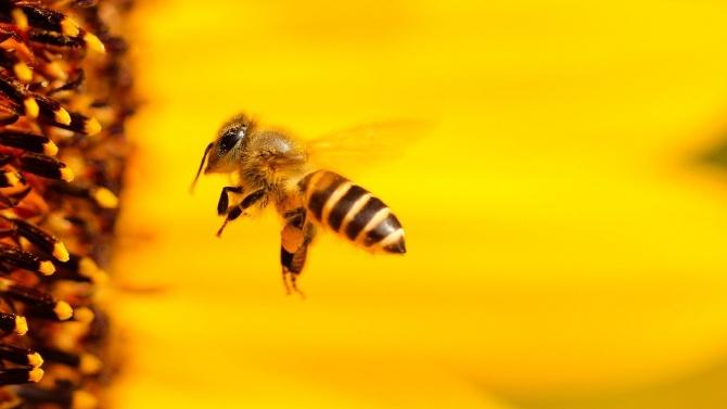 Земните пчели подлъгвали растенията да цъфтят по-рано