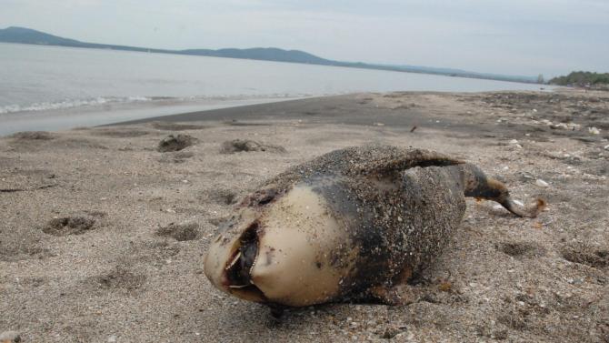 Откриха мъртви делфини на плаж Алепу