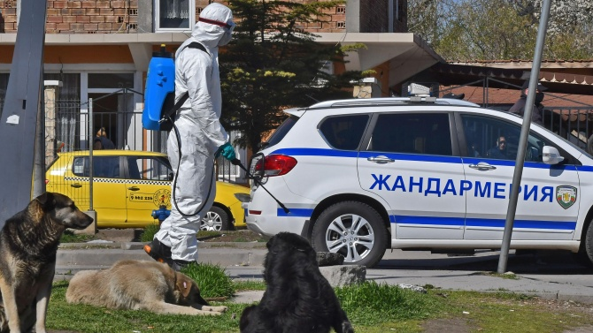 Мъж уби котка, полицията го арестува