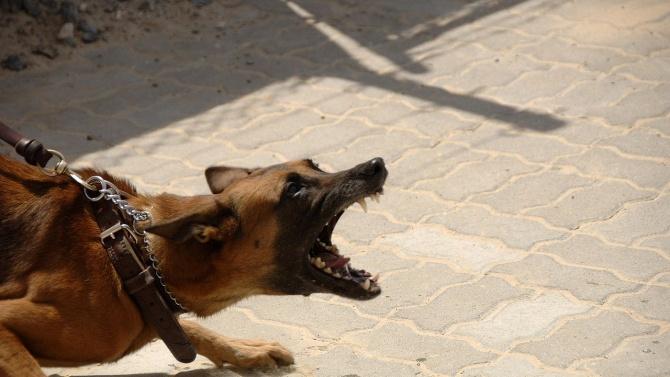Съсед спаси 6-годишно дете от куче на улицата. Случката се