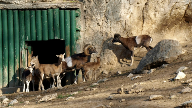 Плевенският зоопарк с вход свободен за децата по случай празника им