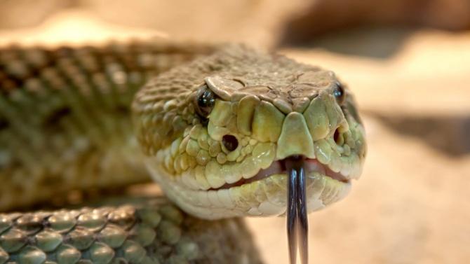 27-годишен младеж загина, след като бе ухапан от една от 20-те си змии