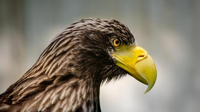 Успешно излекуван млад морски орел отново на свобода