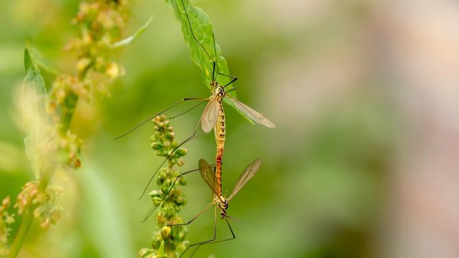 Община Стара Загора започна обработка срещу комари в тревните площи,