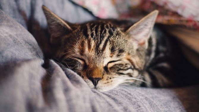 Специалисти съветват как да научим котката да стои сама, преди да се върнем на работа