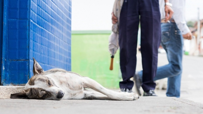 Поредна жестокост: Убиха две кучета в Силистренско