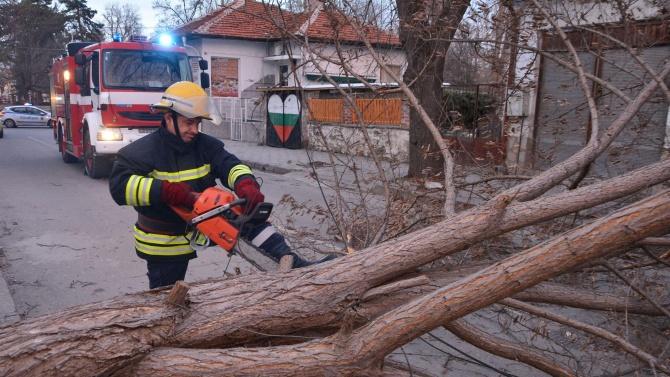 Силен вятър събори дърво върху оградата на болницата в Димитровград