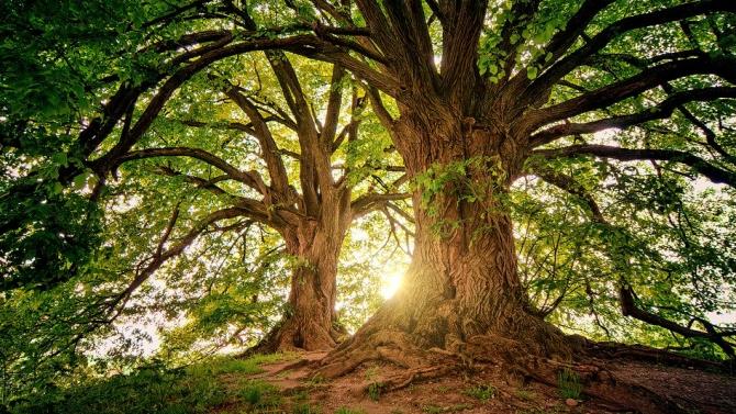 Поставиха под закрила 1690 декара общински вековни гори, чрез определянето