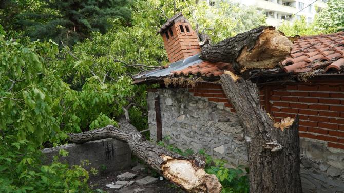 Бурен вятър събори дърво до детска площадка в Хасково