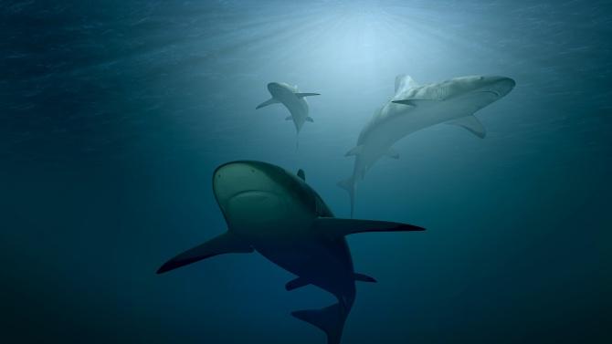 Акула атакува и уби 60-годишен сърфист в Австралия, предаде ДПА,