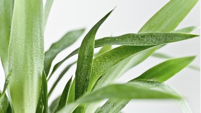Учени успяха да получат електричество от растения