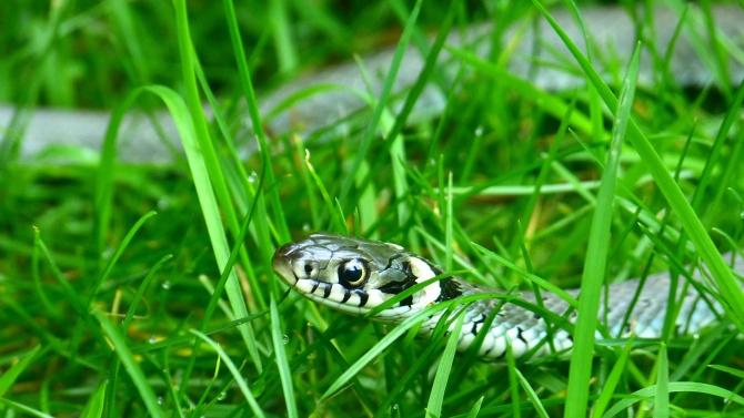 """Змия """"посети"""" детска градина в Кърджали"""