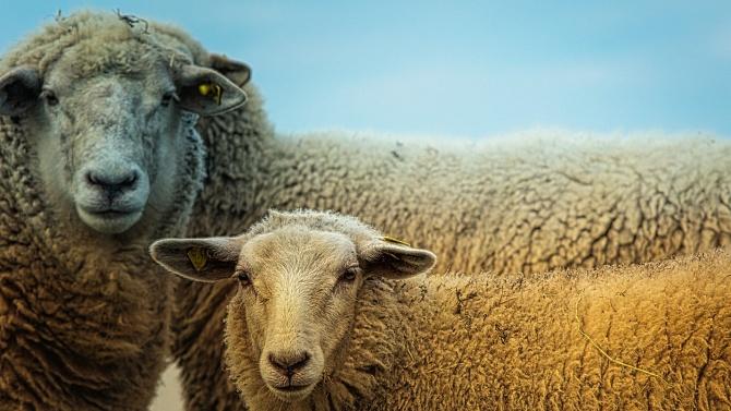 Кръвни проби от преживни животни от четири ферми в Ямболска