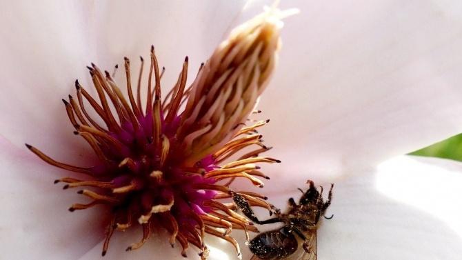 ВАП ангажира министъра на земеделието и изп. директор на БАБХ да предприемат мерки за опазване на пчелите