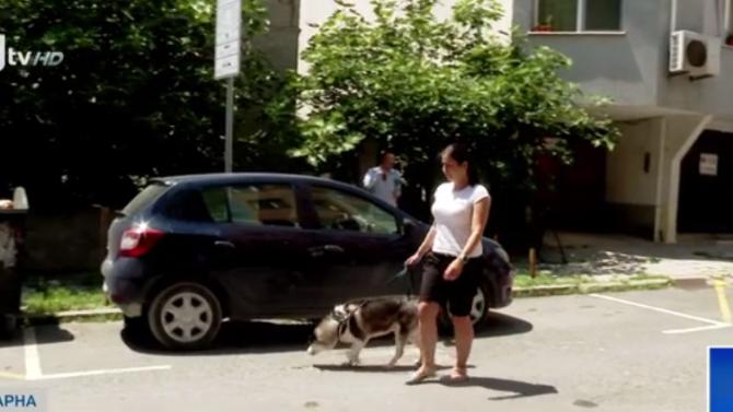 Питбул нападна жена и кучето ѝ във Варна, тя използва електрошок