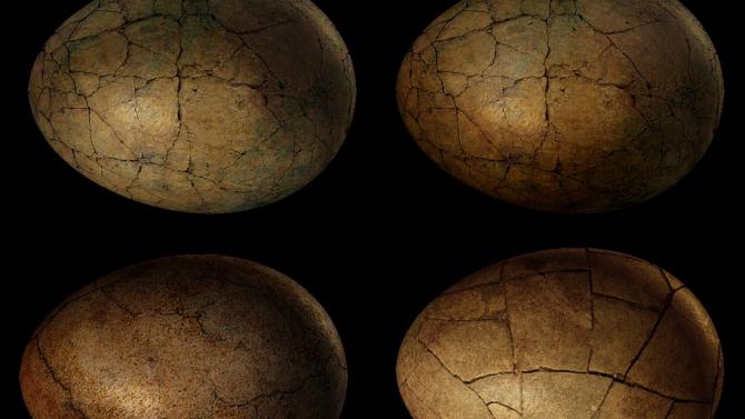 Изследователи са открили в Япония вкаменелост от яйце на динозавър,