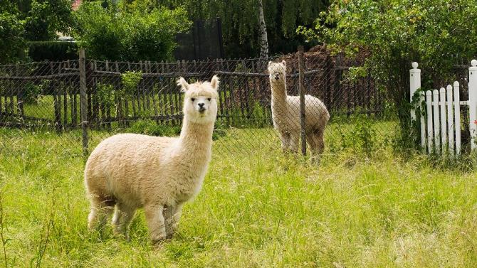 Ферма в Белгия предлага работа мечта. Търсят се трима водачи,