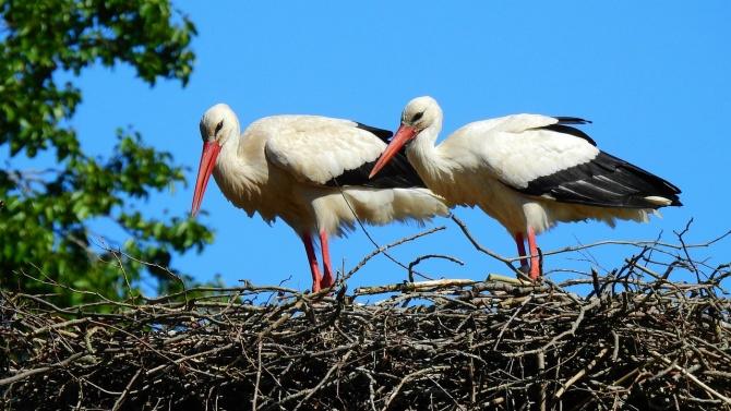Спасиха от запалване щъркелово гнездо