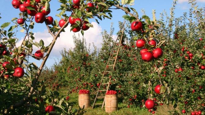 Министерство на земеделието, храните и горите предлага изтегляне на срока