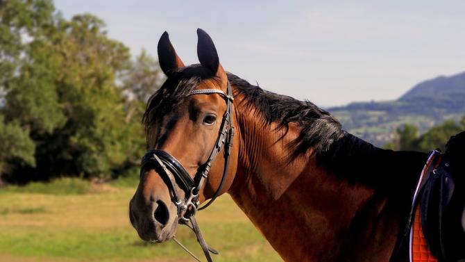 Задържаха двама братя - измъчвали коне