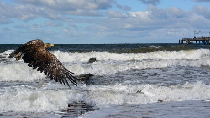 На необичайна гледка станаха свидетели почиващите на плажа в американския