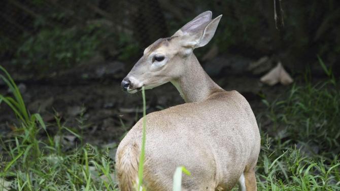 Еленче се роди днес в зоопарка на Хасково