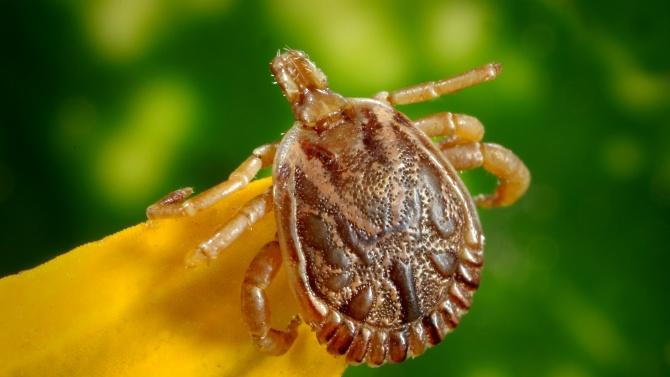 Според данните на Националния център по заразни и паразитни болести