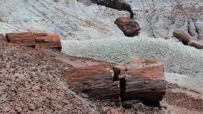 Палеонтолози откриха фосил на гигантска риба в Аржентина