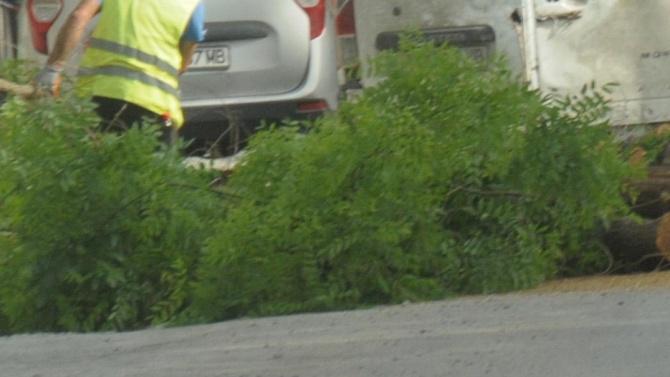 Дърво смаза коли в центъра на София