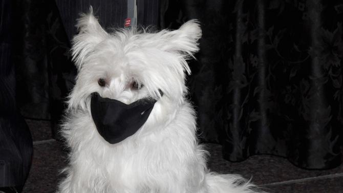 Вътрешното министерство на Обединените арабски емирства (ОАЕ) е мобилизирало кучета