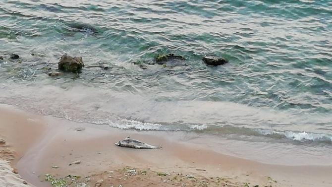 Морето край северночерноморския курорт Св. св. Константин и Елена изхвърли
