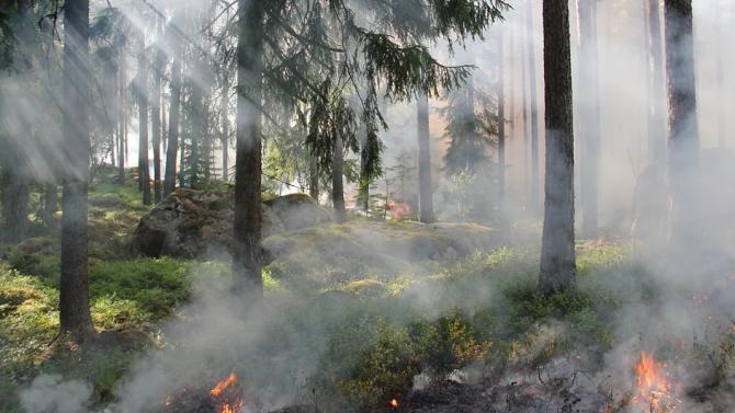 Силни ветрове разпалват горски пожари в Гърция