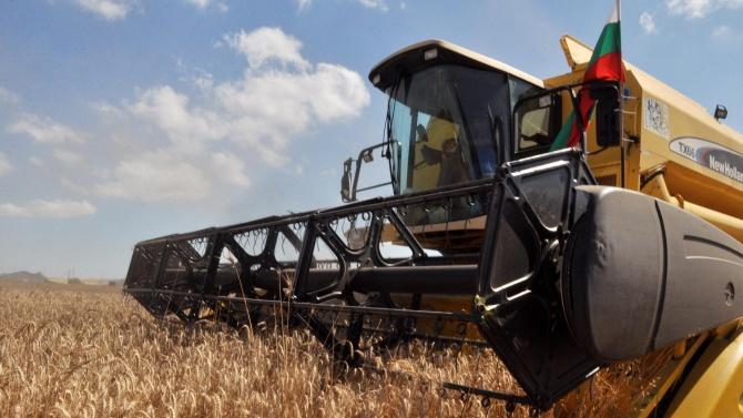 По-слаба реколта от пшеница отчитат земеделците от Димитровградско. Жътвата вече