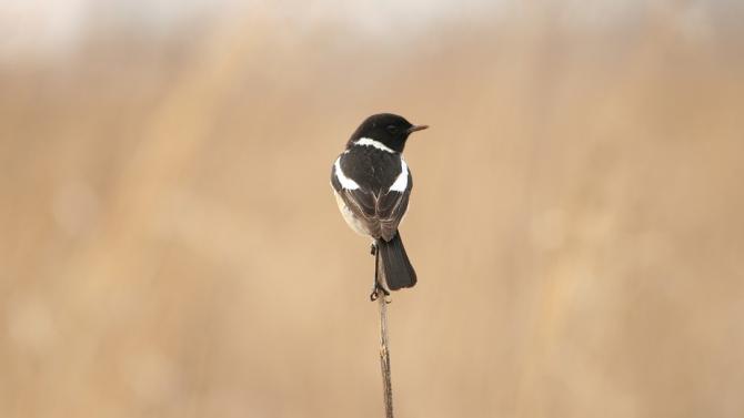 Малки птички са спасени с помощта на експерти от РИОСВ-Шумен